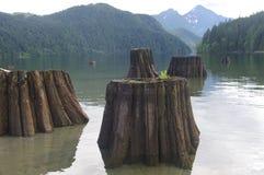 Troncos de árbol muertos en el lago Alouette Imagen de archivo