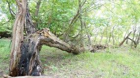 Troncos de árbol quebrados en la tierra Imagen de archivo libre de regalías