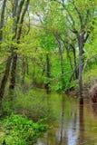 Troncos de árbol viejos en un valle inundado después de las fuertes lluvias que muestran muy Fotografía de archivo libre de regalías