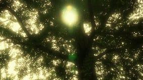 Troncos de árvore ásperos robustos da nogueira-do-Japão & construção antiga chinesa, folhas de sopro da brisa video estoque