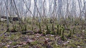 Troncos de árvore Fotografia de Stock Royalty Free