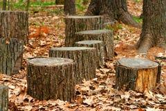 Troncos de árvore Foto de Stock
