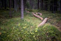 Troncos de árvore abatidos em uma floresta densa Foto de Stock