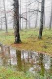 Troncos de árvore com névoa e reflexões em uma poça fotografia de stock royalty free