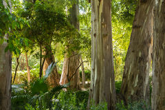 Troncos de árvore da floresta úmida Fotografia de Stock