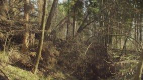 Troncos de árvore despejados filme