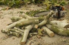 Troncos de árvore do corte Imagem de Stock Royalty Free