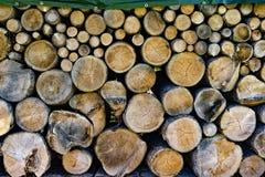 Troncos de árvore em tamanhos diferentes Imagens de Stock