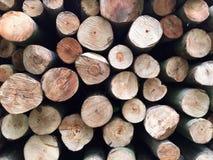 Troncos de árvore empilhados Imagens de Stock Royalty Free