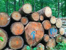 Troncos de árvore empilhados Foto de Stock