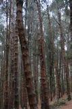 Troncos de árvore na borda da estrada que mostra a floresta densa imagens de stock