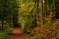 Troncos de árvore na floresta colorida Imagem de Stock