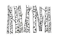 Troncos de árvore tirados mão do vidoeiro ilustração royalty free