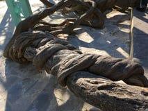 Troncos de árvore torcidos Fotos de Stock