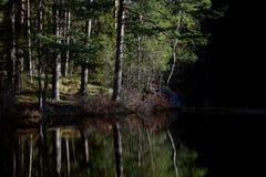 Troncos de abedules en un lago Foto de archivo libre de regalías