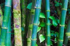 Troncos de bambú Foto de archivo