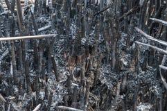Troncos de bambú quemados a las cenizas Imagenes de archivo
