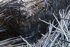 Troncos de bambú quemados a las cenizas Imágenes de archivo libres de regalías