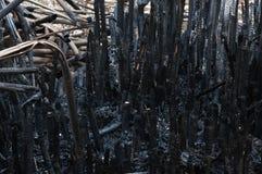 Troncos de bambú quemados a las cenizas Imagen de archivo libre de regalías
