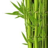 Troncos de bambú verdes con las hojas Foto de archivo