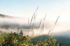 Troncos de la hierba contra fondo de la niebla Imágenes de archivo libres de regalías
