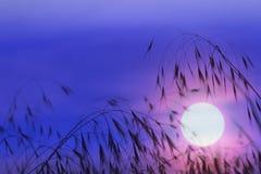 Troncos de la hierba en el amanecer en sol rojo Imagen de archivo libre de regalías
