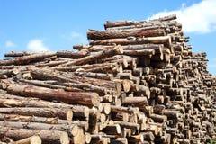 Troncos de la madera Foto de archivo libre de regalías