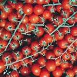 Troncos de los tomates, muchos tomates, fresco brillante rojo foto de archivo libre de regalías