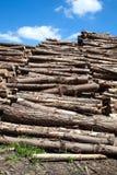Troncos de madera Fotos de archivo libres de regalías