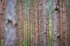 Troncos de árbol en bosque Imagen de archivo libre de regalías