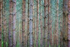 Troncos de árbol en bosque Fotografía de archivo