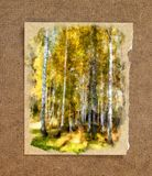 Troncos del abedul blanco en un vestido de oro Acuarela rusa del otoño Foto de archivo