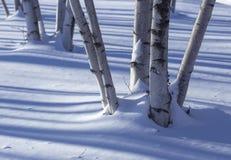 Troncos del abedul en la nieve Imagen de archivo libre de regalías