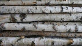 Troncos del abedul para la leña, la madera constructiva o la decoración Betula Papyrifera Fondo de madera natural Imágenes de archivo libres de regalías
