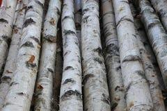 Troncos del abedul para la leña, la madera constructiva o la decoración Betula Papyrifera Fondo de madera natural Fotografía de archivo