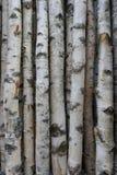 Troncos del abedul para la leña, la madera constructiva o la decoración Betula Papyrifera Fondo de madera natural Imagen de archivo libre de regalías