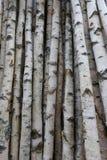 Troncos del abedul para la leña, la madera constructiva o la decoración Betula Papyrifera Fondo de madera natural Imagenes de archivo