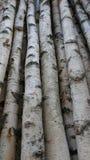 Troncos del abedul para la leña, la madera constructiva o la decoración Betula Papyrifera Fondo de madera natural Foto de archivo
