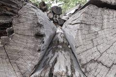 Troncos del corte de los árboles y apilados Fotos de archivo libres de regalías