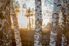 Troncos del otoño de abedules Imagen de archivo