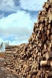 Troncos do log dos pinheiros da floresta Foto de Stock