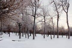 Troncos e filiais calvos de árvore do inverno fotografia de stock