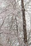Troncos e ramos de árvore alta encerrados no gelo Imagem de Stock Royalty Free