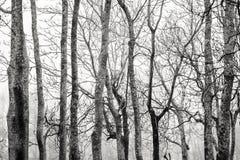 Troncos e ramos de árvore contra o céu Imagem de Stock Royalty Free