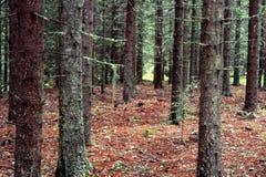 Troncos en bosque fotos de archivo