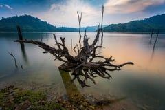Troncos en el lago Belum-Temengor fotos de archivo libres de regalías