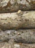 Troncos musgosos velhos da maçã na pilha Fotos de Stock
