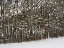 Troncos Nevado y ramas de robles Foto de archivo libre de regalías