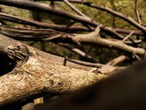 Troncos parduscos secados de la planta imagen de archivo