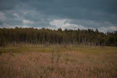 Troncos putrefactos del abedul en el campo con el bosque en el fondo y el cielo azul Oscuridad y mirada dramática Fotos de archivo
